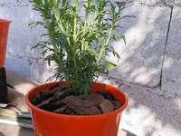Moja żółta roślina - Patrzę, jak rośnie