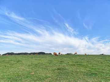 En campagne française - bruna får på grönt gräsfält under blå himmel under dagtid. Étretat, Frankrike