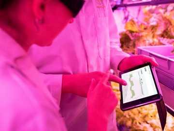 man in roze overhemd met zwarte smartphone - Ingenieurs monitoren gewassen in een duurzame binnenboerderij.