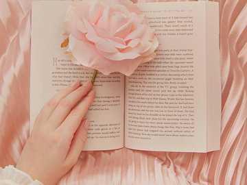 Χαριτωμένη φωτογραφία - εικόνα, φράση, τριαντάφυλλο, χαριτωμένο