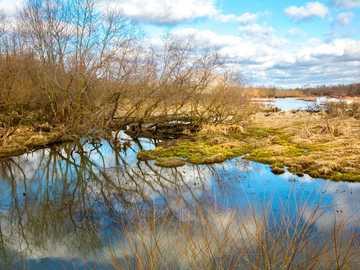 bruna bladlösa träd på vatten - Vinter träskområde, Fredericksburg, Ohio.