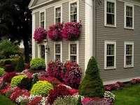 Blumen auf dem Grundstück