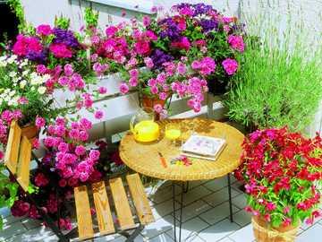 kwiaty na tarasie - m............................