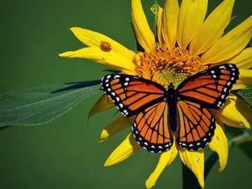 motyl na kwiatku - m............................