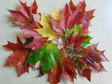 Folhas de bordo de outono - Folhas do nosso playground