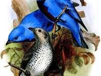 Mexicaans vogelkruid