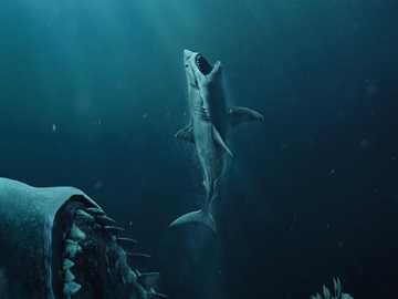 Drapieżne rekiny - Rekiny – ogólna nazwa grupy gatunków, rodzajów, a nawet rodzin drapieżnych ryb chrzęstnoszkie