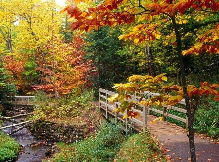 Мост и река, есен (10×8)