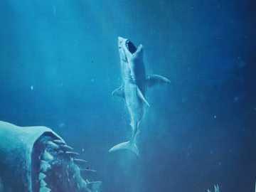 Obří žralok - Obrázek zvířat v potravinovém řetězci