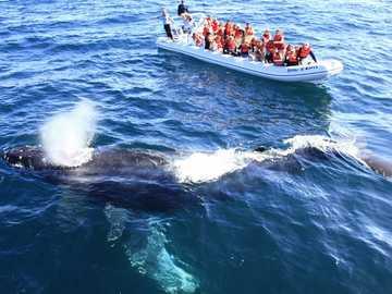 Réserve de biosphère de Vizcaíno - Observation des baleines grises en Baja California Sur Mexique