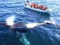 Biosphärenreservat Vizcaíno - Grauwalbeobachtung in Baja California Sur Mexiko