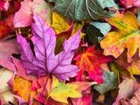 folhas coloridas - folhas de outono coloridas