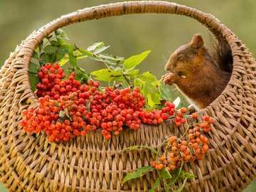 Cesta de vime - Cesta de vime, esquilos, bagas brancas