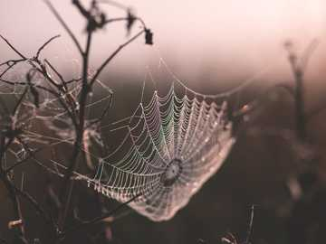 Ragnatela sulla pianta - colpo a macroistruzione della ragnatela. Suchawa, Polonia