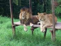 Zoo - Dove si prendono cura degli animali