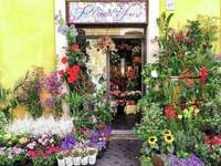 Florist in Rome - Florist in Rome