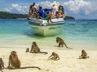 island of monkeys - m ....................