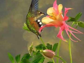 borboleta na flor - m ....................