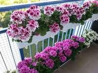 fleurs en pots sur le balcon