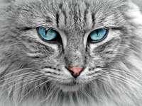 Pisică pufoasă - Această imagine îi va mulțumi pe toți participanții la fabrica de puzzle-uri
