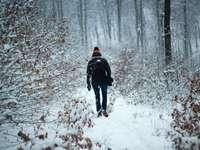 Dame en haar hond - persoon die tijdens de winter tussen bomen loopt.