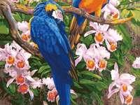 Kolorowe papugi