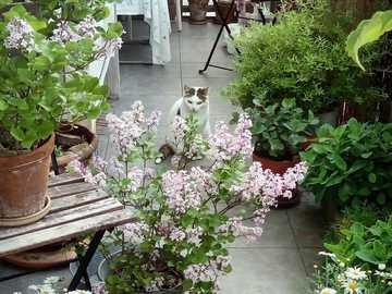 balcón con un gatito - gatito escondido en las plantas