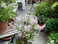 μπαλκόνι με γατάκι - γατάκι που κρύβεται στα φυτά