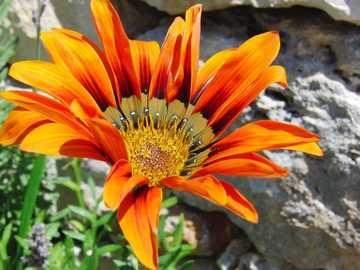 Vida vegetal na região da Basilicata, na Itália - Vida vegetal na região da Basilicata, na Itália