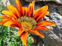Vida vegetal na região da Basilicata, na Itália