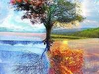 Trees four seasons - Trees four seasons