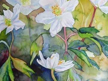 Flores brancas aquarela - Flores brancas aquarela