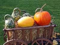 Őszi kerti dekoráció tökkel