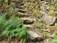Stone staircase - Santo Estevo pier. Ribeira Sacra, Galicia, Spain
