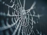 selectieve focus fotografie van spinnenweb - Een bevroren ochtend kan verbazingwekkende kleine dingen onthullen. Voordat ik aan het werk ging, na