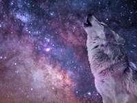Vlkpuzzlelehke - Lobo, morado, espacio, rompecabezas