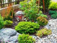 part of the garden - perennial plants in the garden