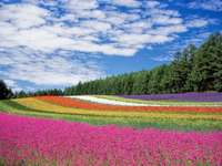 Rainbow - Wonderful colorful field