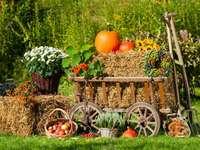 Podzimní dekorace v zahradě - Podzimní dekorace v zahradě