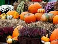 Podzimní sklizeň a dekorace