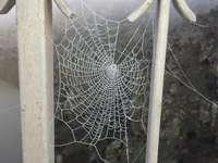 Spider web - Frozen spider web