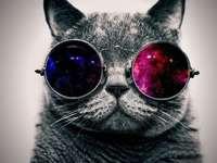 gato com vidros coloridos - é um gato com óculos é cinza adorável e estranho espero que gostem Amix