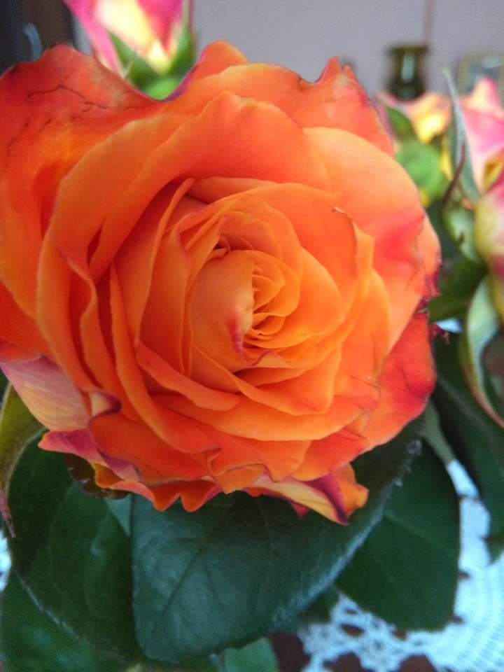 rose rose rubéole - cadeau thé rose (9×12)