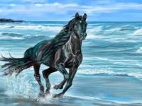 black horse by the sea - m ...................