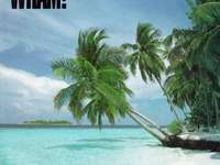 Club Tropicana - This Is A Song Called Club Tropicana Is By George Michael And Andrew Ridley.