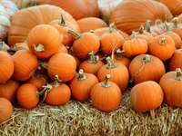 The Pumpkin Patch - pile of orange squash. Wesley United Methodist Church, Bakersfield, United States