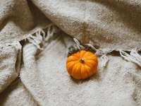 Paw Pumpkin Linen Fabric - pumpkin on brown canvas textile. London, United Kingdom