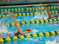person swimming in the pool - backstroke, swimming, pool, college, racing.