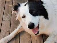 Buster - le chien pirate sympathique - Je souris à ma personne. Elle signifie tout pour moi.