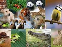 Vertebrates on the attack - Solve this puzzle that you will surely find everything